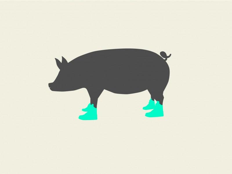 pig-04